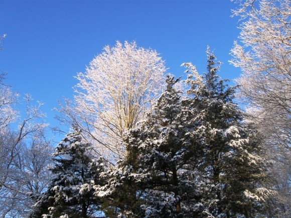 A snow covered tree top surveys the scene