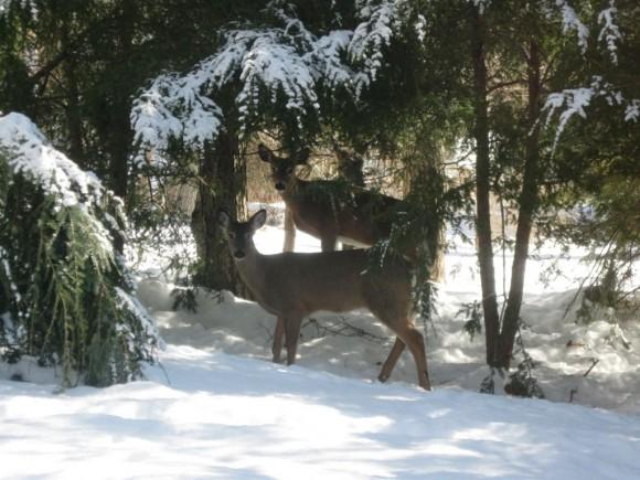 The deer look at us as we look at them