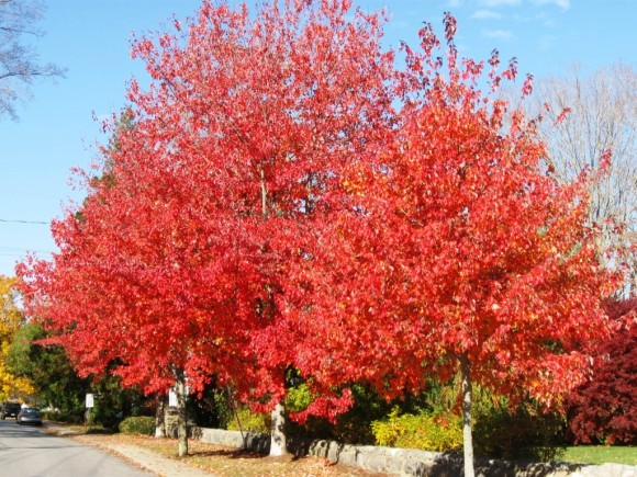 First, there is an autumn tree in full colored splendor