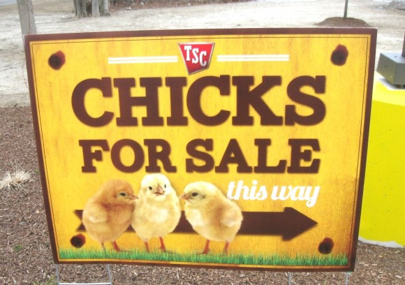 Chickens for Sale sign at tractor company