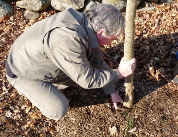 Essex Tree-ATB grant 2014