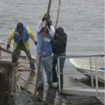 Club members straining to put the dock's in rapid Connecticut River waters
