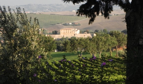 1.Angelini Vineyards and Estate 1 – The Angelini Family vineyards are located in the timeless central region of Le Marche, Italy