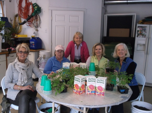 Pictured L>R are Dee Dee Charnok, Jane Dickinson, Coral Rawn, Gay Thorn, and Daphne Nielson  preparing tomato plants for the Essex Garden Club May Market.
