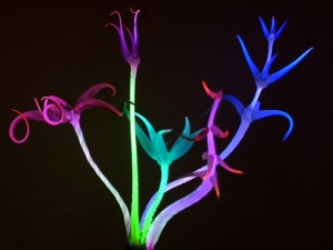 Luminous glass artist Mundy Hepburn will have his unique neon flower sculptures at Chester Gallery and several other galleries.