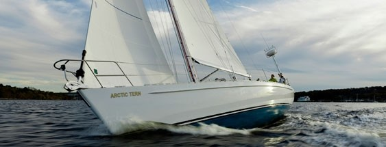 arctic_tern_sailboat