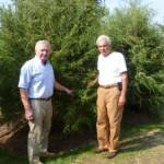 Bruce Glowac, President of the Essex Foundaation and Augie Pampel, Essex Tree Warden admire the new Eastern Red Cedars along West Avenue in Essex.  Missing from the photo is Paul Fazzino, Jr., Essex Fire Chief.
