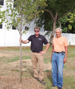 Donated_tree_to Essex_by_Bartlett_Tree _Experts