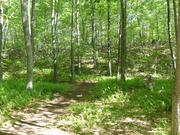 An idyllic scene of the newly acquired 'Preserve,' where the Essex Land Trust will lead a Family Outing, Aug. 22.