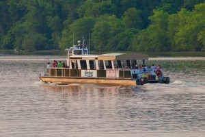 The RiverQuest boat offers a perfect viewing spot to see the swallows in action.
