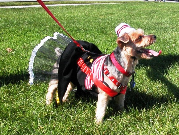 Best costume is just one of the canine competitions to be held at Dogs on the Dock at the Connecticut River Museum on Sunday, October 11.