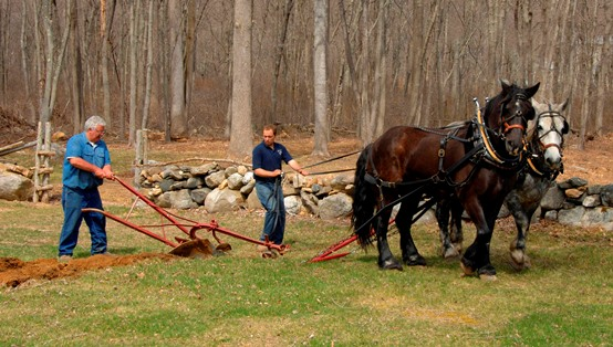 Plowing with a team of horses is one of the free events at Bushnell Farm on May 28. photo by Jody Dole