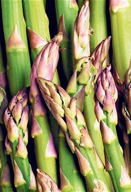asparagusmainpic_2203991b