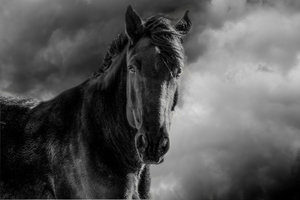 Black Beauty by Elin Dole is the signature photo of the photo exhibition at Maple & Main.