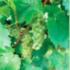 Haddam Garden Club Hosts a Vineyard Afternoon in Higganum, Saturday