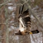 RiverQuest's 'Winter Wildlife Eagle Cruise' Offers Remarkable Insight, Views of CT River